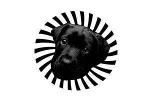 contractor-unlimited-partner-blackdog